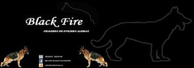 Criadero Black Fire